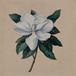 Magnolia  (oil on canvas, 30 x 30 cm) $1200    SOLD